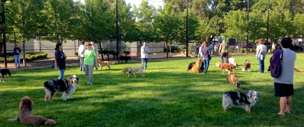 One Days Garbage   Dog Park Reopens
