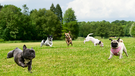 column_where-are-the-best-dog-park-in-the-us